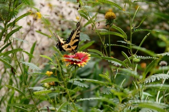 Finding refuge in the wildflowers