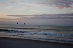 Pelicans flying westward