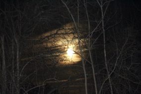 Full moon view through clouds & trees