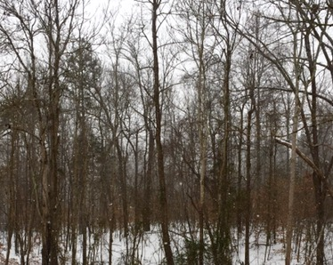 first snow of 2017 ~ southern view