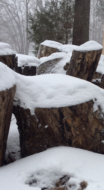 ~ Snow Day~