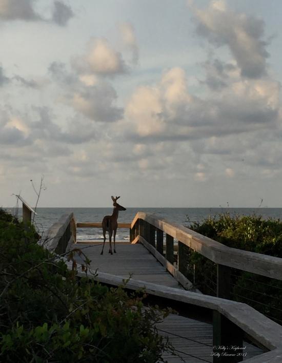 Buck Surveying the dunes