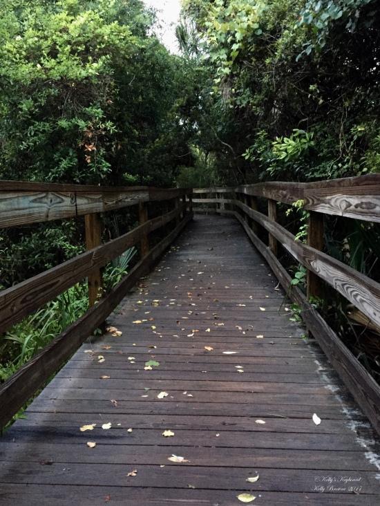 Walkway to the beach ~ Kiawah