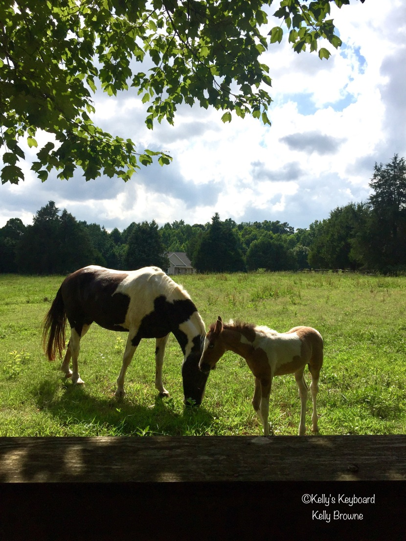 Shade trees, green pastures, and a blue eyed baby horse named Surprise.