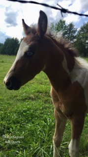 The baby colt's name is Surprise. Look at those blue eyes!