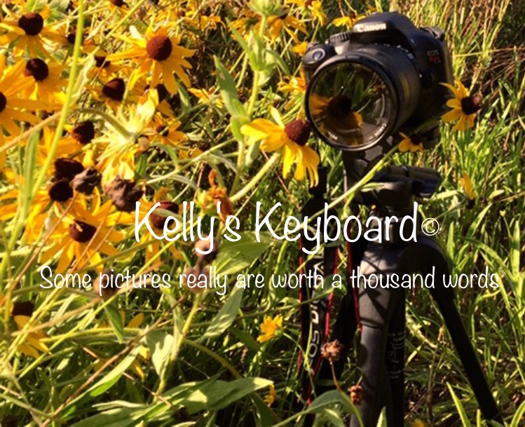 Kelly's keyboard